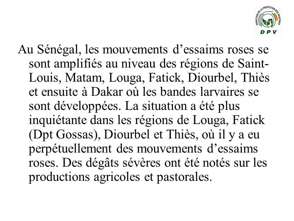 Au Sénégal, les mouvements d'essaims roses se sont amplifiés au niveau des régions de Saint-Louis, Matam, Louga, Fatick, Diourbel, Thiès et ensuite à Dakar où les bandes larvaires se sont développées.