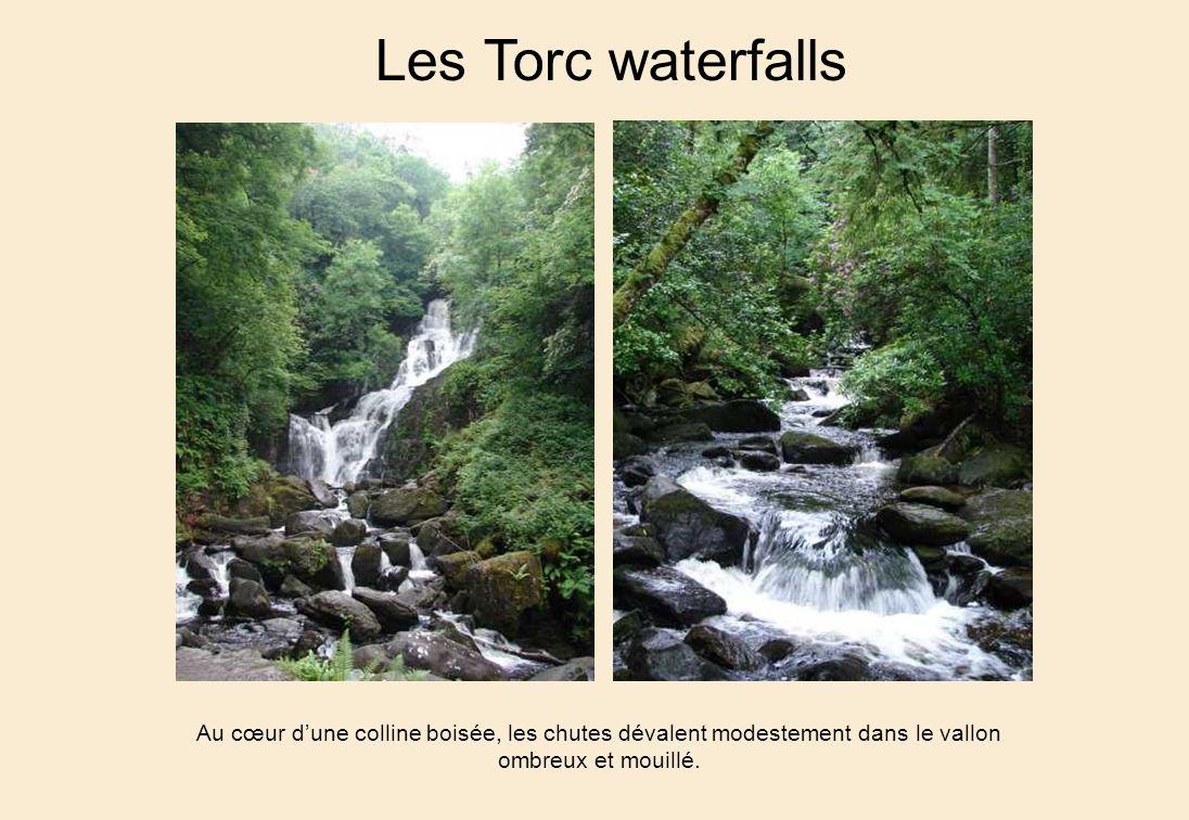 Les Torc waterfalls Au cœur d'une colline boisée, les chutes dévalent modestement dans le vallon ombreux et mouillé.