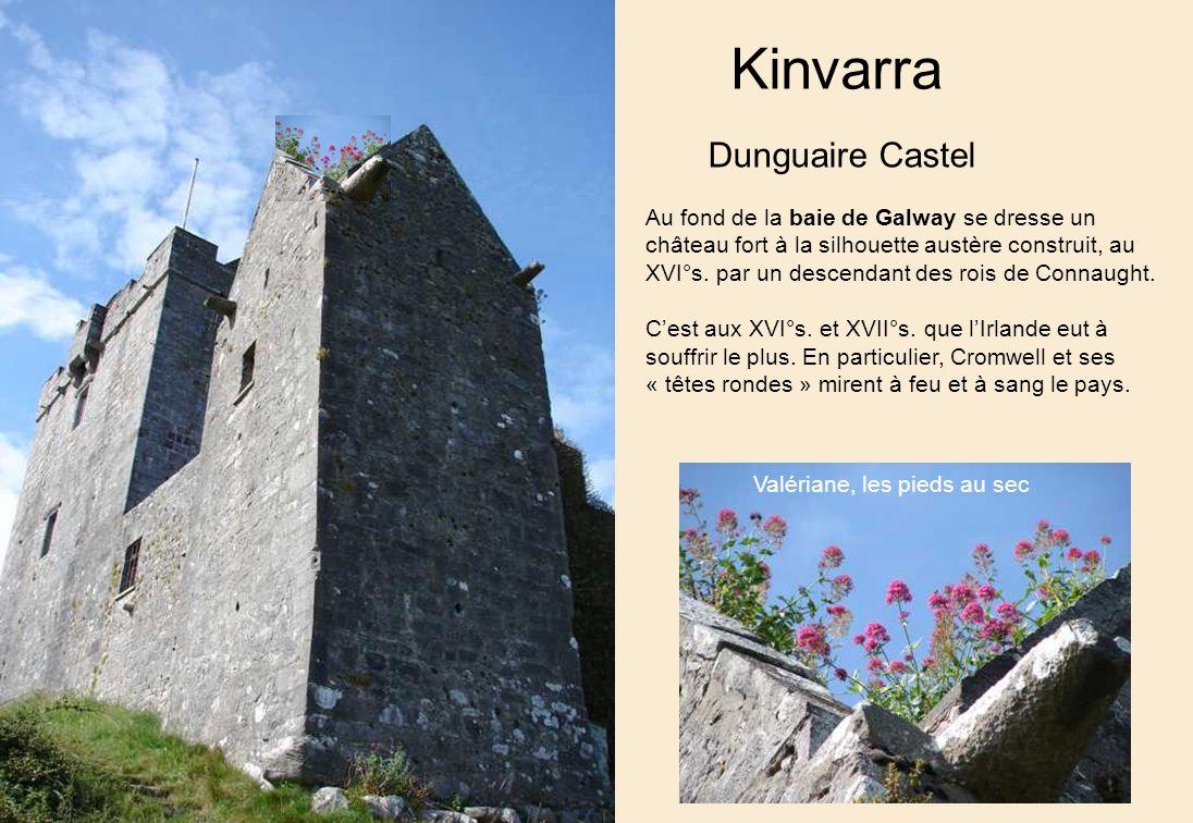 Kinvarra Dunguaire Castel