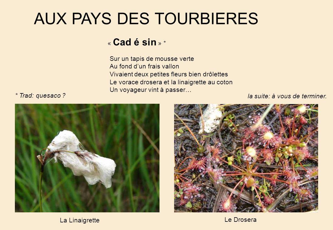 AUX PAYS DES TOURBIERES