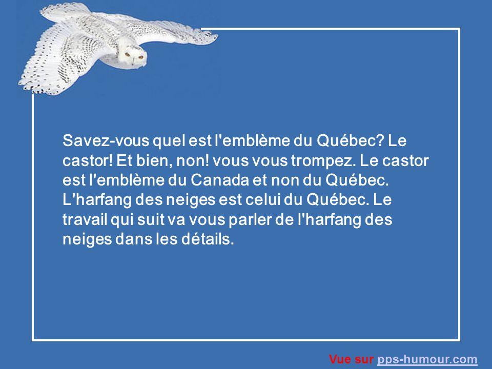Savez-vous quel est l emblème du Québec. Le castor. Et bien, non
