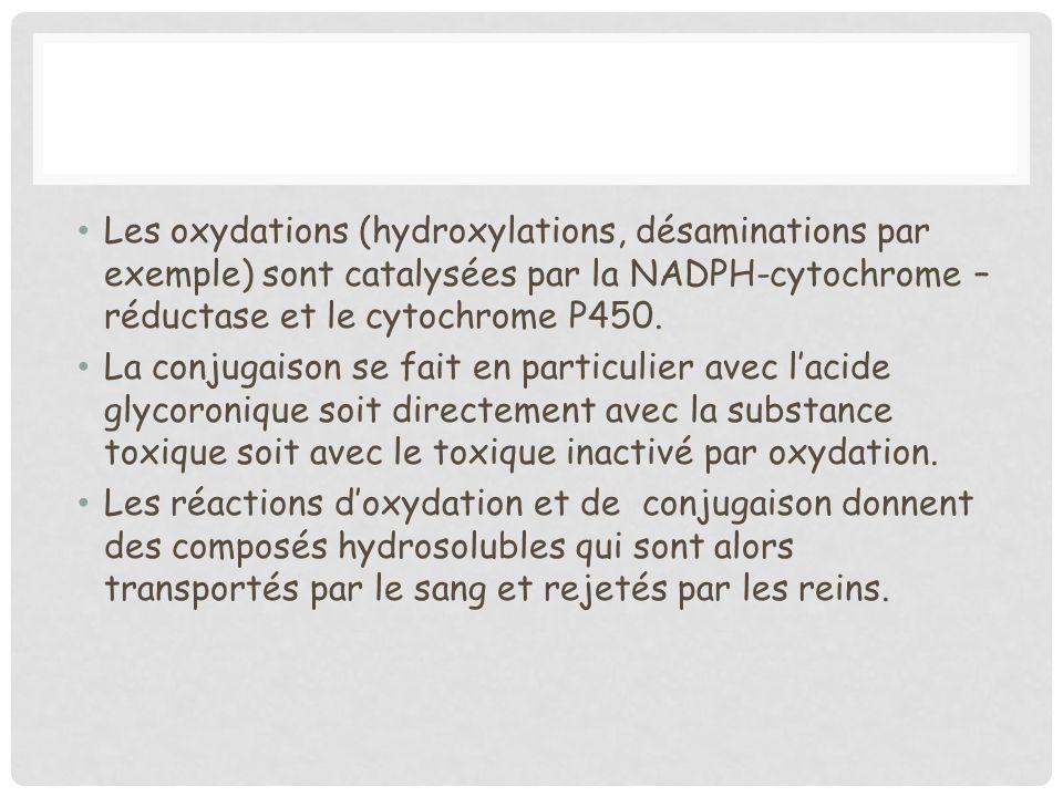 Les oxydations (hydroxylations, désaminations par exemple) sont catalysées par la NADPH-cytochrome – réductase et le cytochrome P450.