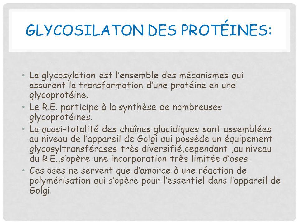 Glycosilaton des protéines: