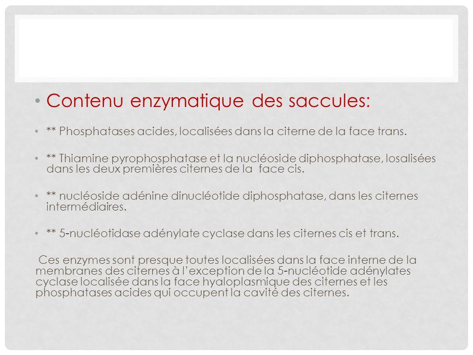 Contenu enzymatique des saccules: