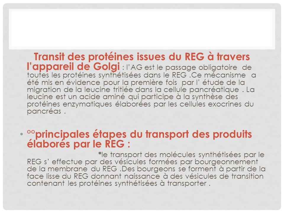 °°principales étapes du transport des produits élaborés par le REG :