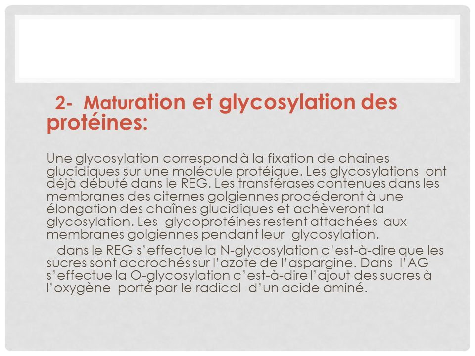 2- Maturation et glycosylation des protéines: