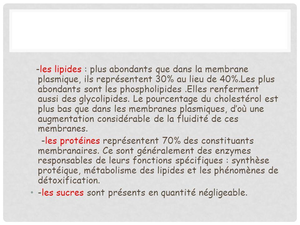 -les lipides : plus abondants que dans la membrane plasmique, ils représentent 30% au lieu de 40%.Les plus abondants sont les phospholipides .Elles renferment aussi des glycolipides. Le pourcentage du cholestérol est plus bas que dans les membranes plasmiques, d'où une augmentation considérable de la fluidité de ces membranes.