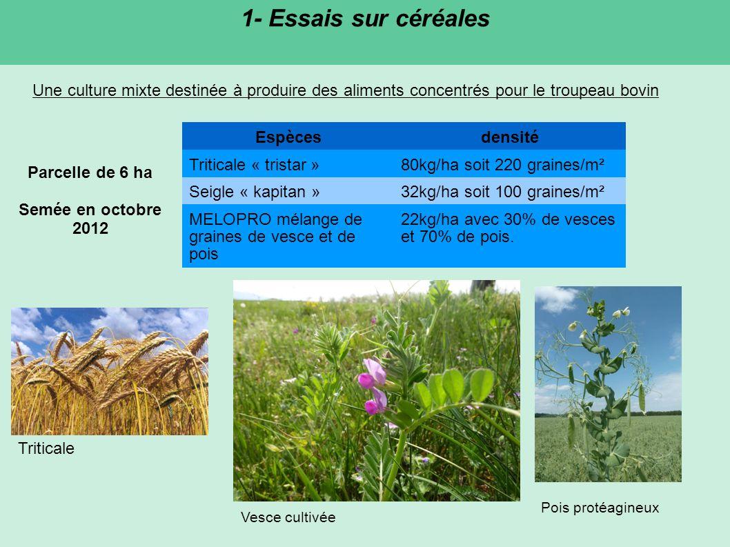 1- Essais sur céréales Une culture mixte destinée à produire des aliments concentrés pour le troupeau bovin.