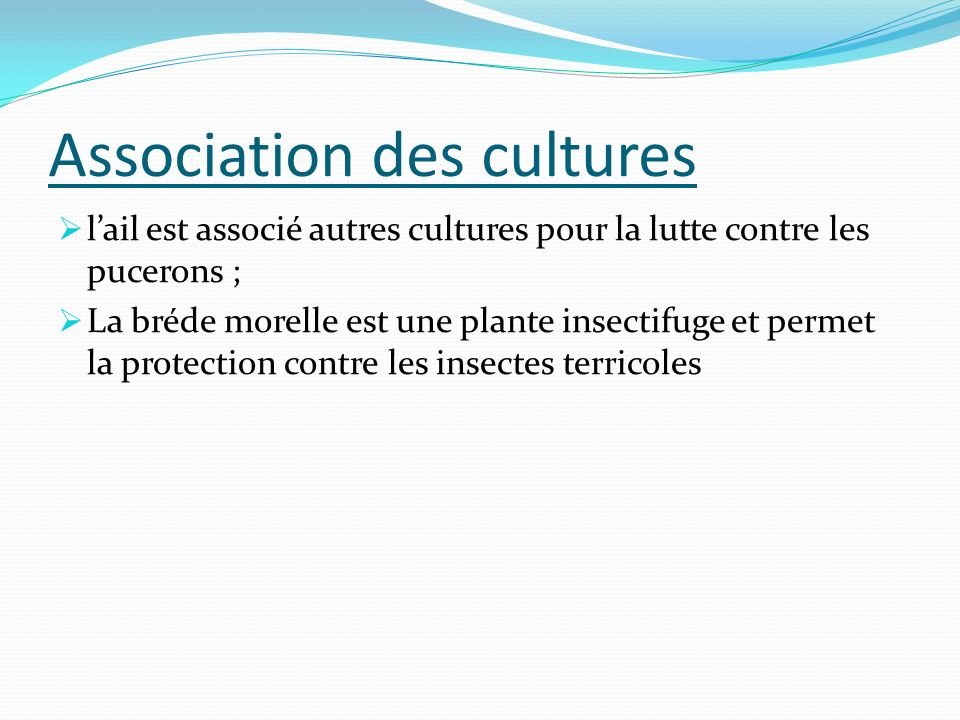 Association des cultures