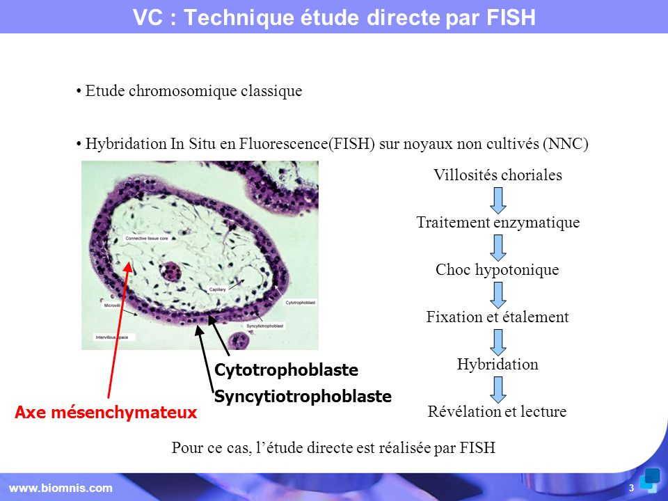 VC : Technique étude directe par FISH