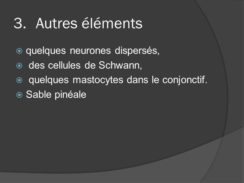 Autres éléments quelques neurones dispersés, des cellules de Schwann,