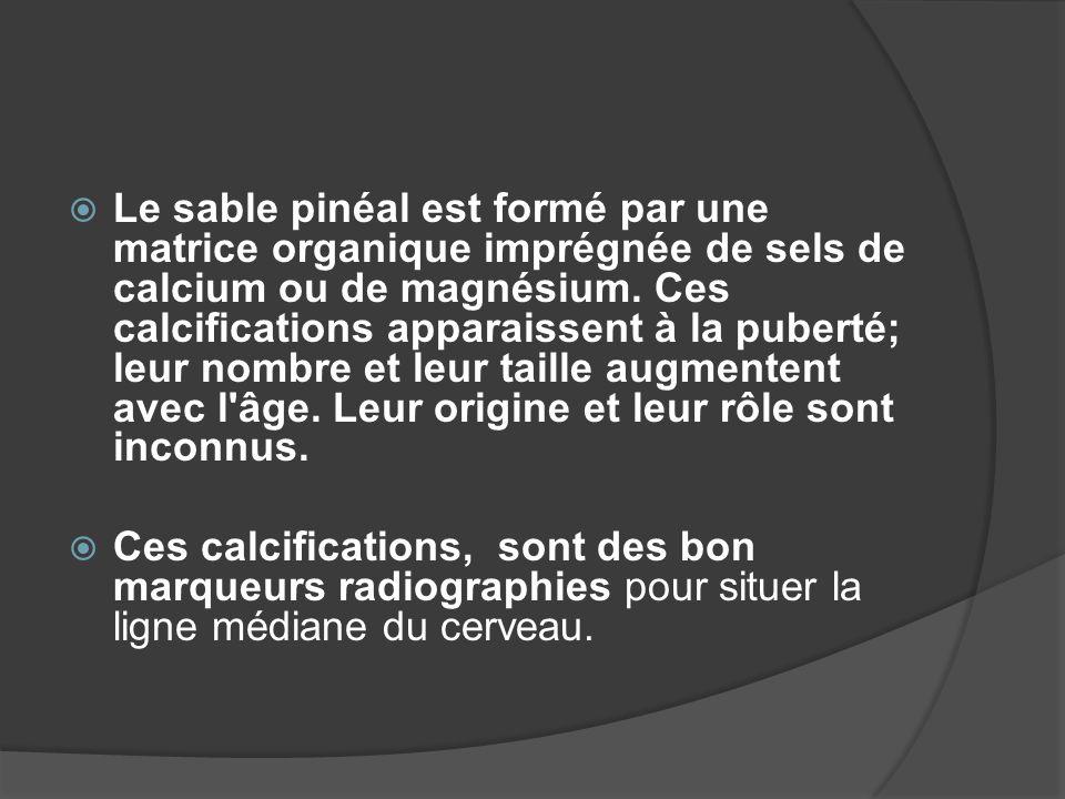 Le sable pinéal est formé par une matrice organique imprégnée de sels de calcium ou de magnésium. Ces calcifications apparaissent à la puberté; leur nombre et leur taille augmentent avec l âge. Leur origine et leur rôle sont inconnus.