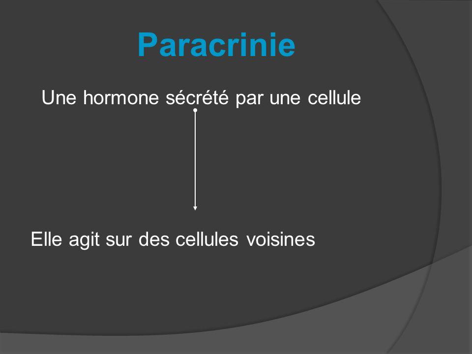 Paracrinie Une hormone sécrété par une cellule Elle agit sur des cellules voisines