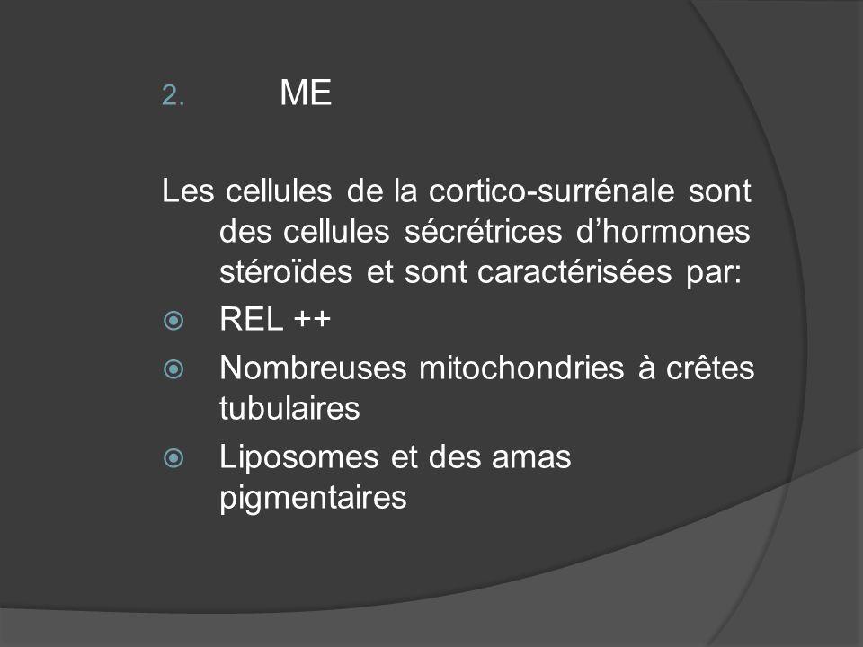 ME Les cellules de la cortico-surrénale sont des cellules sécrétrices d'hormones stéroïdes et sont caractérisées par: