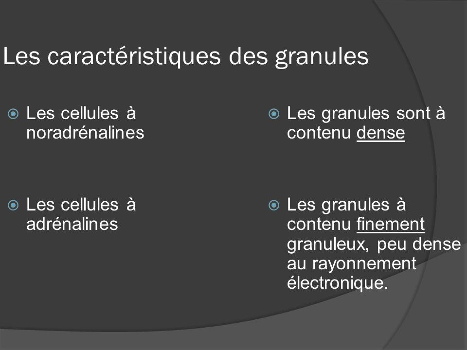 Les caractéristiques des granules