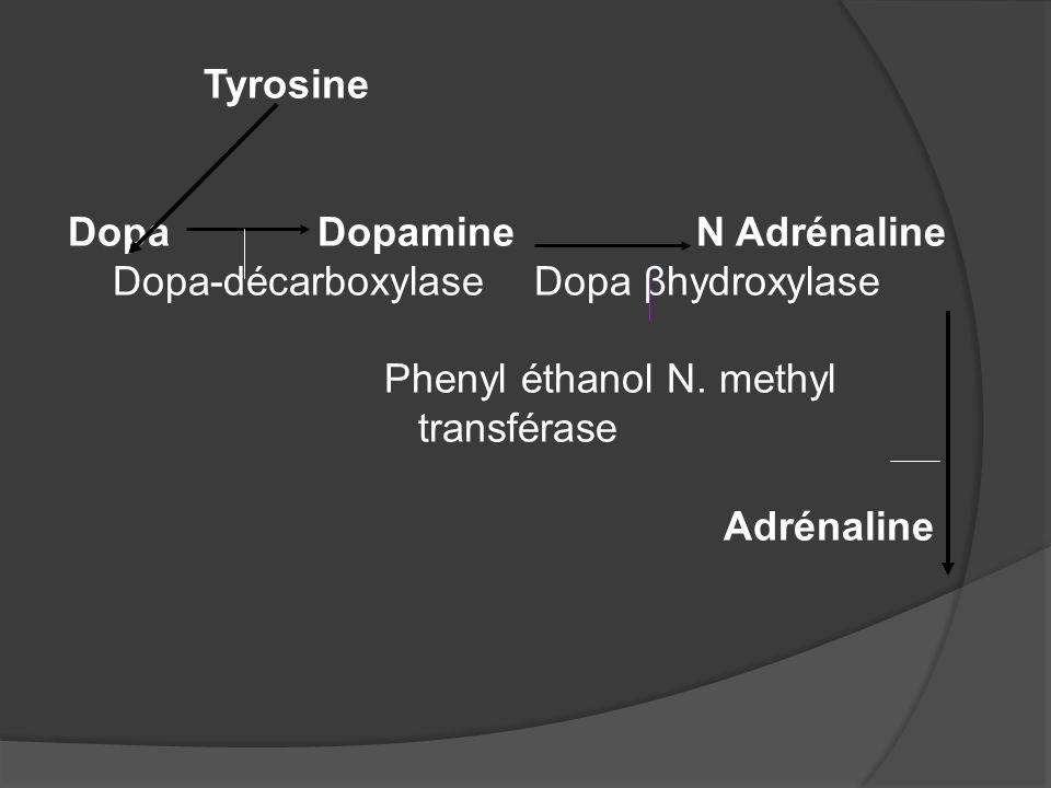 Tyrosine Dopa Dopamine N Adrénaline. Dopa-décarboxylase Dopa βhydroxylase.
