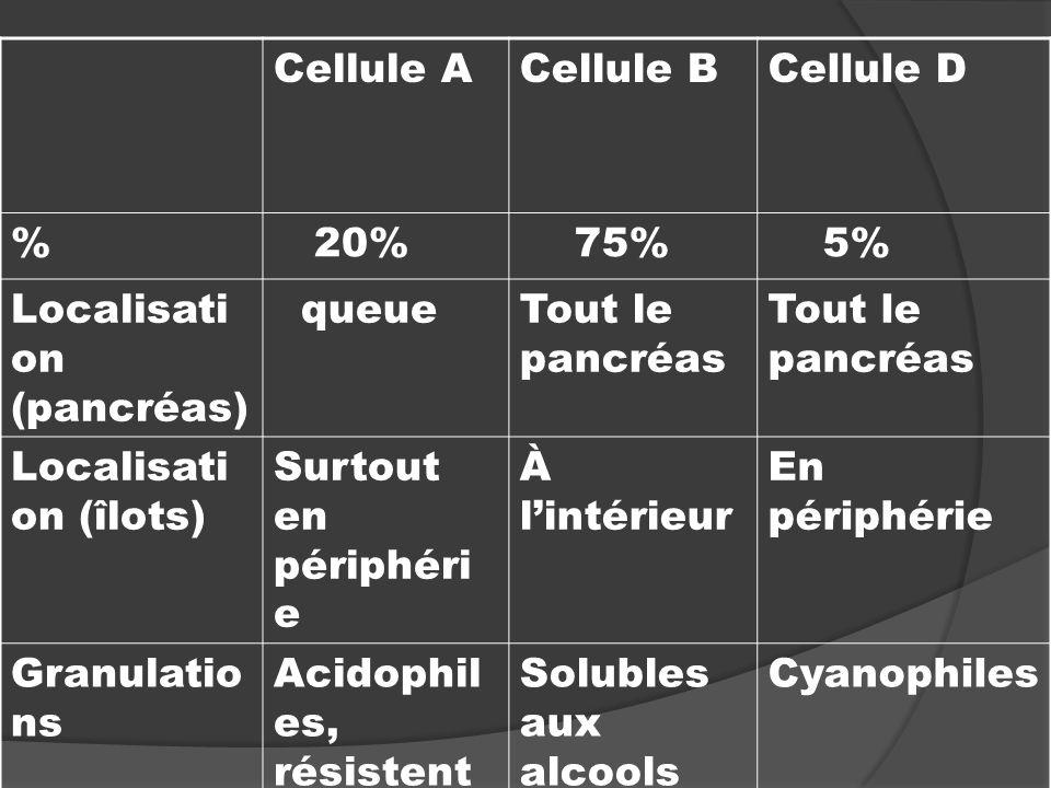 Cellule A Cellule B. Cellule D. % 20% 75% 5% Localisation (pancréas) queue. Tout le pancréas.