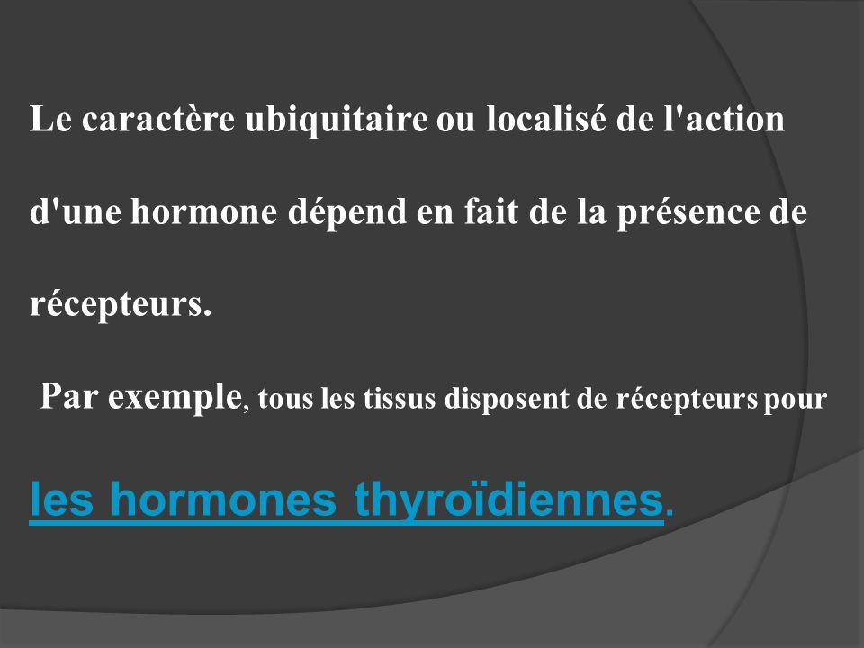les hormones thyroïdiennes.
