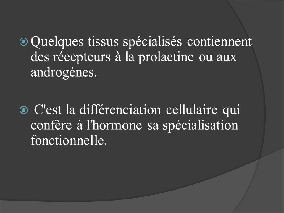 Quelques tissus spécialisés contiennent des récepteurs à la prolactine ou aux androgènes.