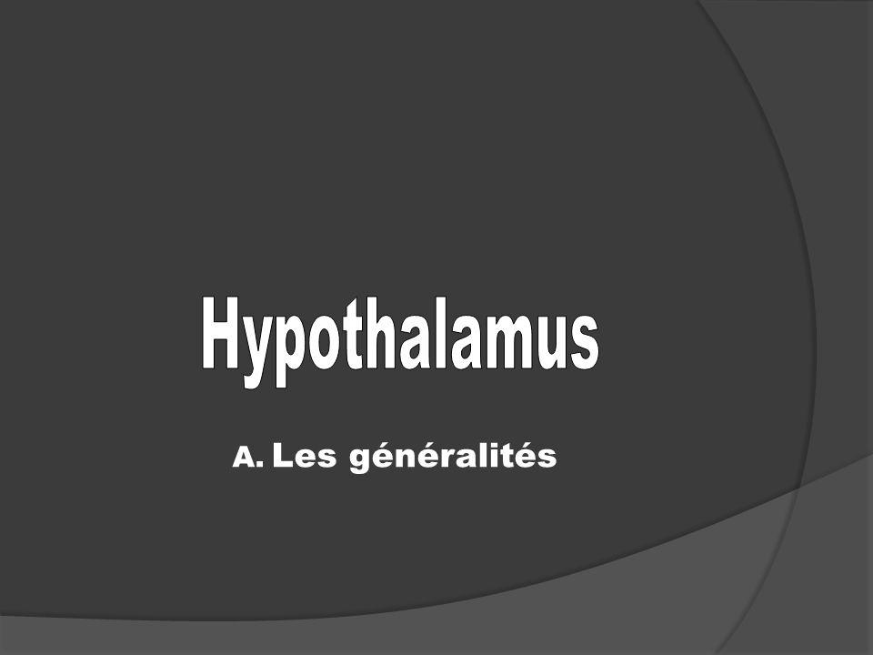 Hypothalamus A. Les généralités