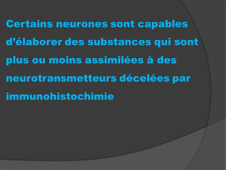 Certains neurones sont capables d'élaborer des substances qui sont plus ou moins assimilées à des neurotransmetteurs décelées par immunohistochimie