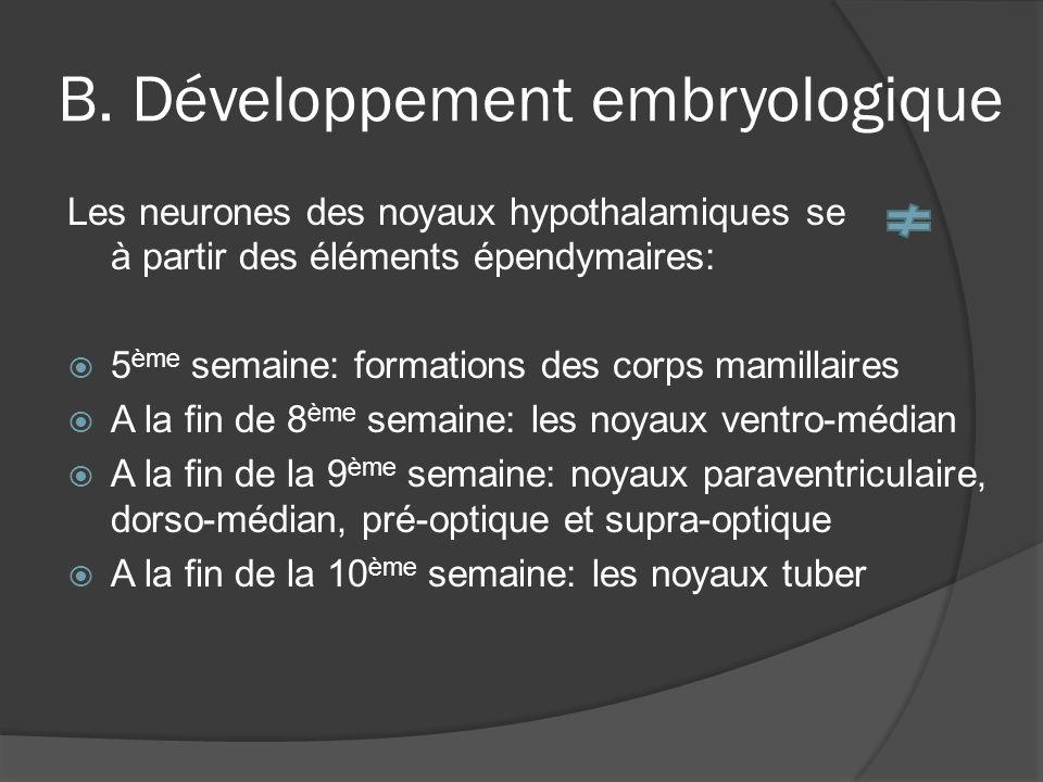 B. Développement embryologique