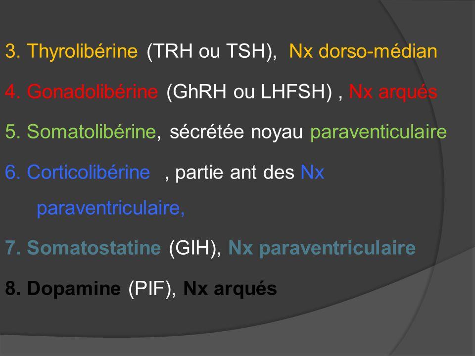 3. Thyrolibérine (TRH ou TSH), Nx dorso-médian 4