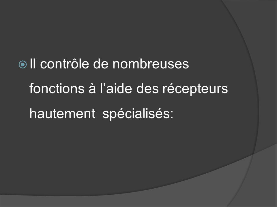 Il contrôle de nombreuses fonctions à l'aide des récepteurs hautement spécialisés: