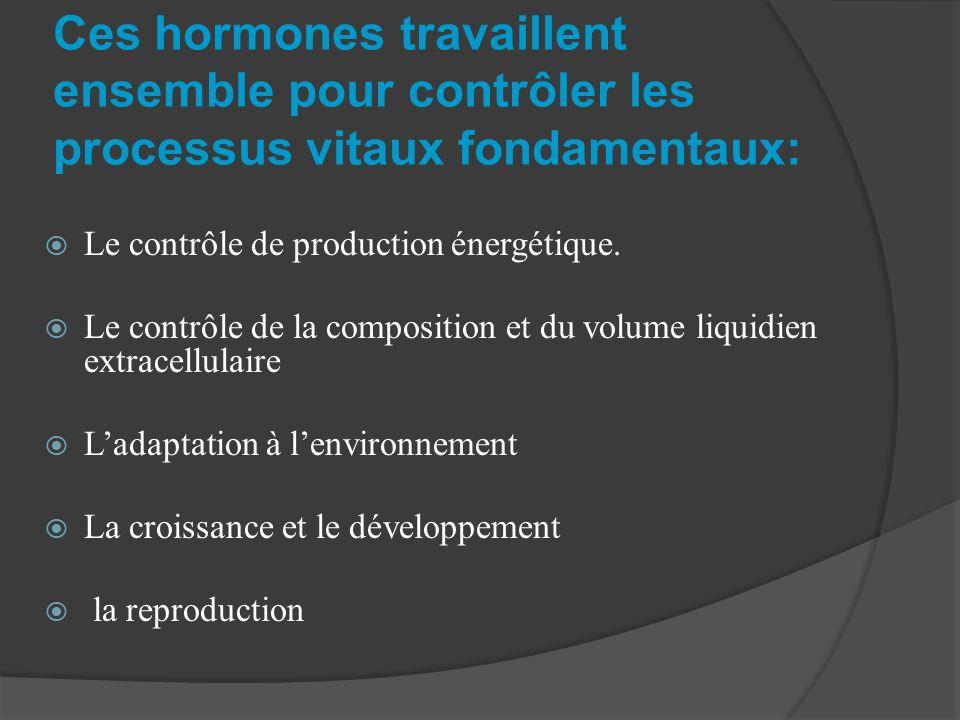 Ces hormones travaillent ensemble pour contrôler les processus vitaux fondamentaux:
