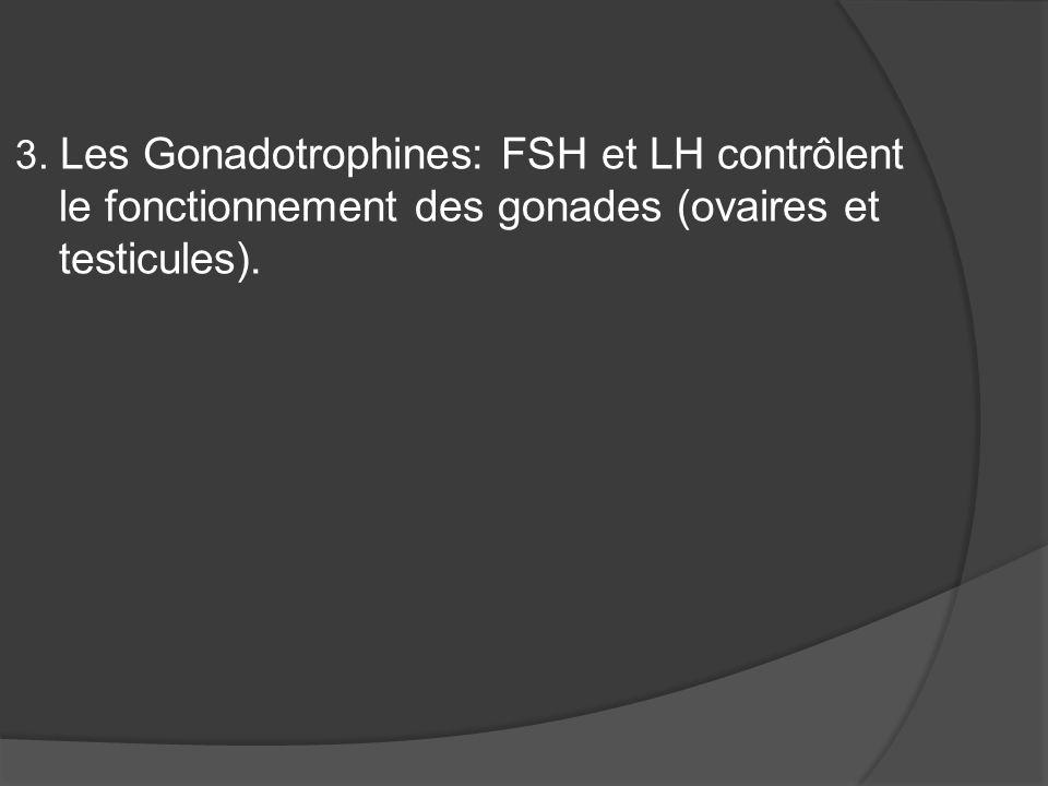 3. Les Gonadotrophines: FSH et LH contrôlent le fonctionnement des gonades (ovaires et testicules).