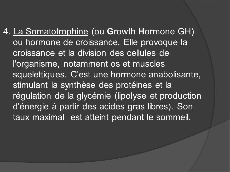 4. La Somatotrophine (ou Growth Hormone GH) ou hormone de croissance