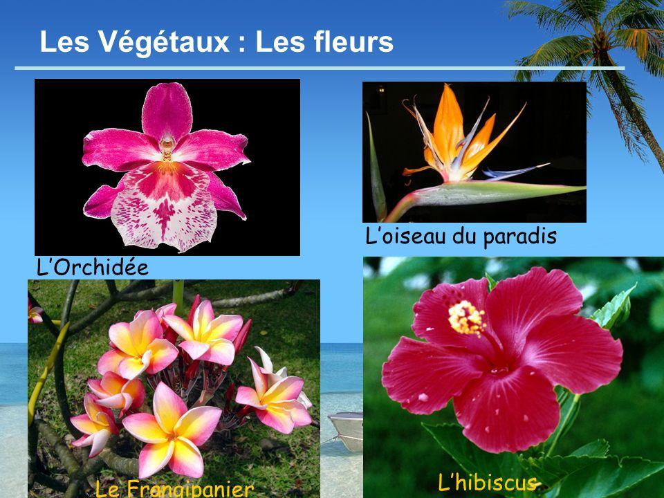 Les Végétaux : Les fleurs