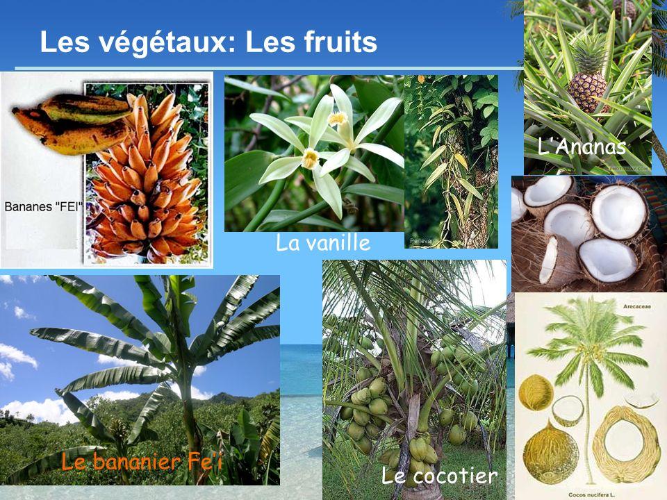 Les végétaux: Les fruits