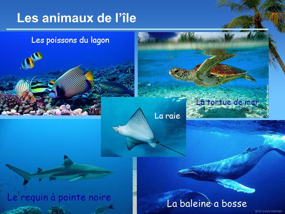 Les animaux de l'île Le requin à pointe noire La baleine a bosse