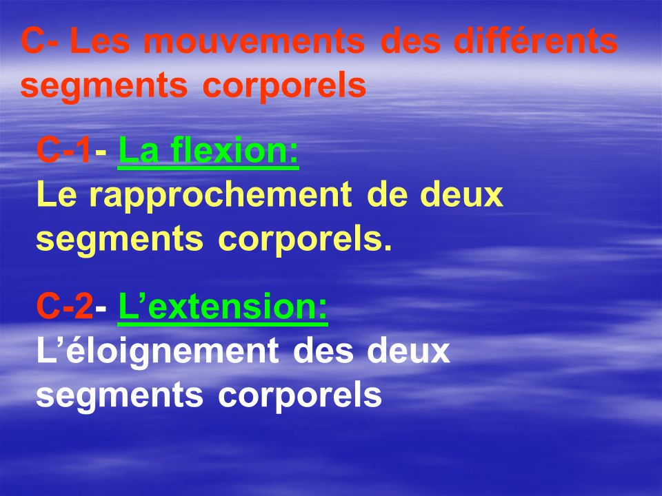 C- Les mouvements des différents segments corporels