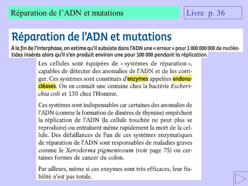 Réparation de l'ADN et mutations