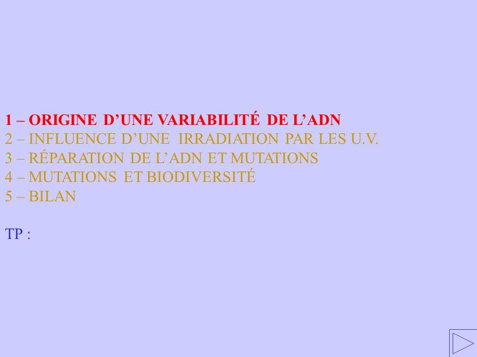 1 – ORIGINE D'UNE VARIABILITÉ DE L'ADN