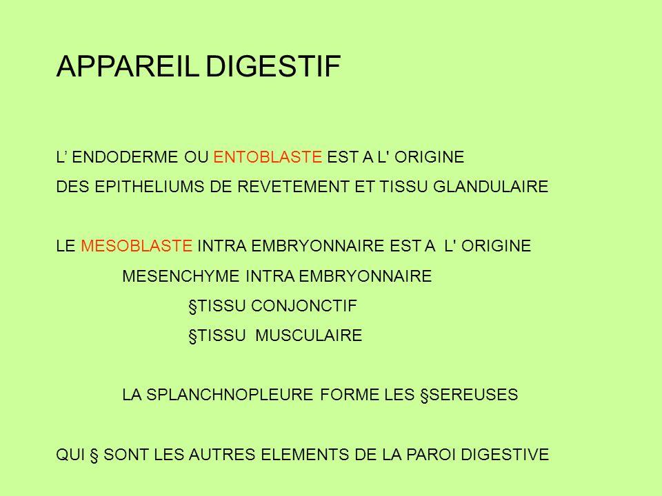 APPAREIL DIGESTIF L' ENDODERME OU ENTOBLASTE EST A L ORIGINE