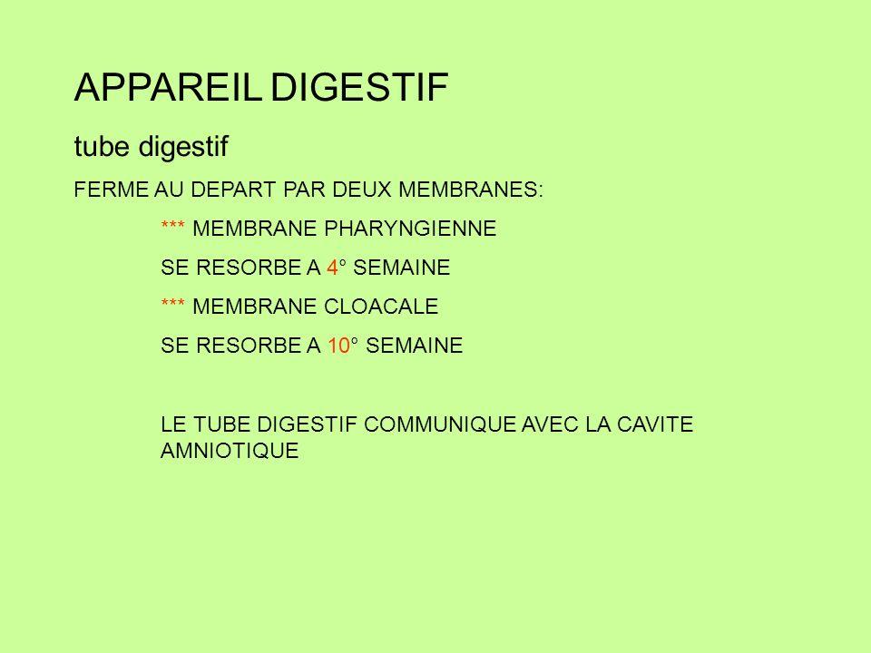 APPAREIL DIGESTIF tube digestif FERME AU DEPART PAR DEUX MEMBRANES: