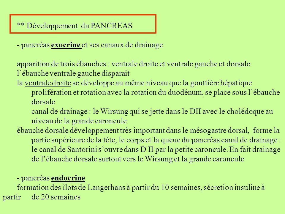 ** Développement du PANCREAS