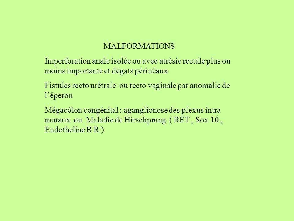 MALFORMATIONS Imperforation anale isolée ou avec atrésie rectale plus ou moins importante et dégats périnéaux.