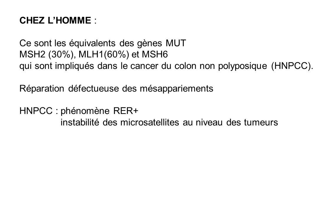 CHEZ L'HOMME : Ce sont les équivalents des gènes MUT. MSH2 (30%), MLH1(60%) et MSH6.