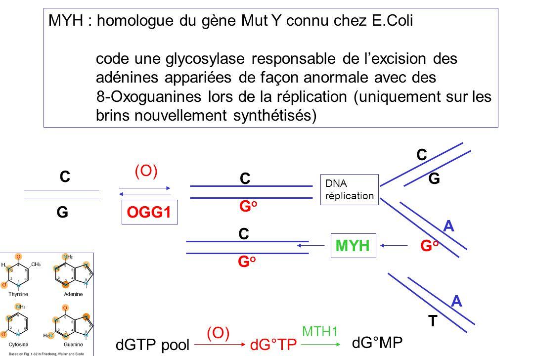 MYH : homologue du gène Mut Y connu chez E.Coli