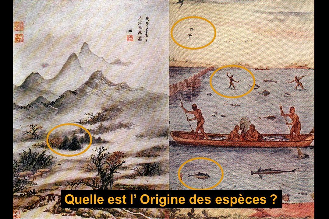 Quelle est l' Origine des espèces