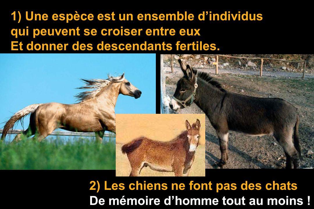 1) Une espèce est un ensemble d'individus