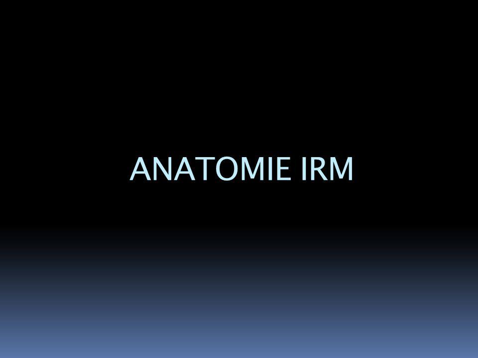 ANATOMIE IRM