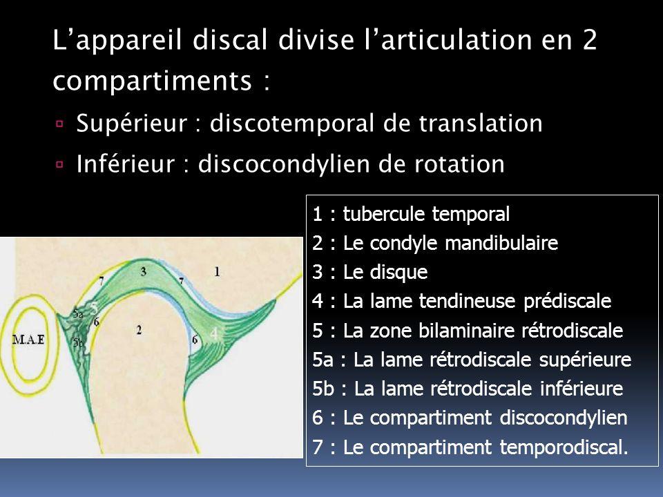 L'appareil discal divise l'articulation en 2 compartiments :