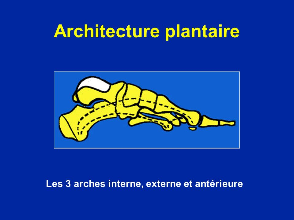 Architecture plantaire