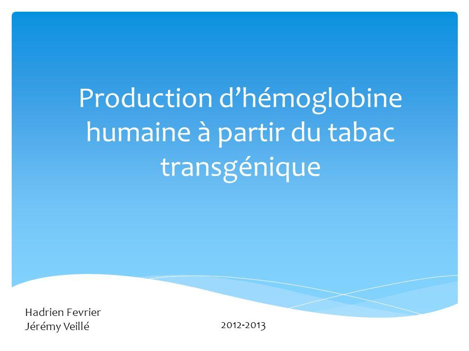Production d'hémoglobine humaine à partir du tabac transgénique