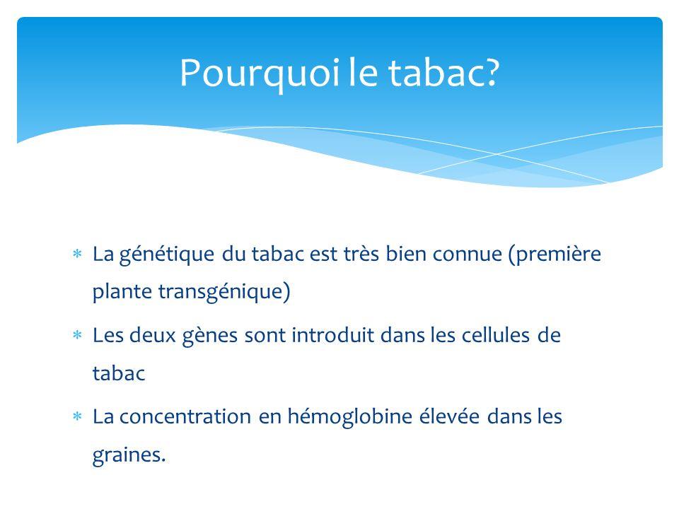 Pourquoi le tabac La génétique du tabac est très bien connue (première plante transgénique)
